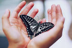 butterfly by young-fascination
