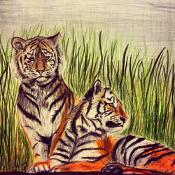 More Tigers by brownalliecat