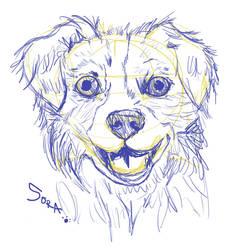 Sora Sketch