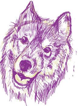 Husky sketch