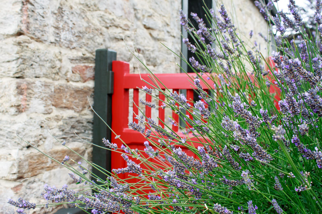 Lavender Gate by firouz222