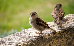 Sparrows on Watch by ARC-Photographic