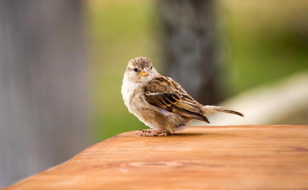 Sparrow Surprise by ARC-Photographic