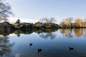 Winter on the Pond by ARC-Photographic