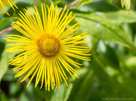 A Spot of Yellow by ARC-Photographic