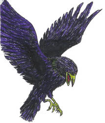 Kruk Crow by zalev01
