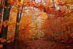 Path through the Beech grove