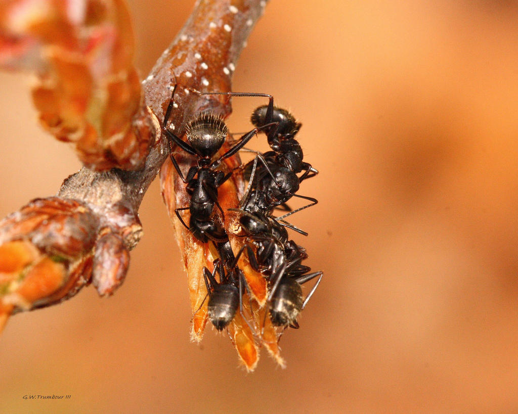 Ants by natureguy
