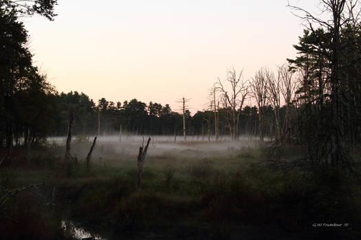 Daybreak in the Marsh