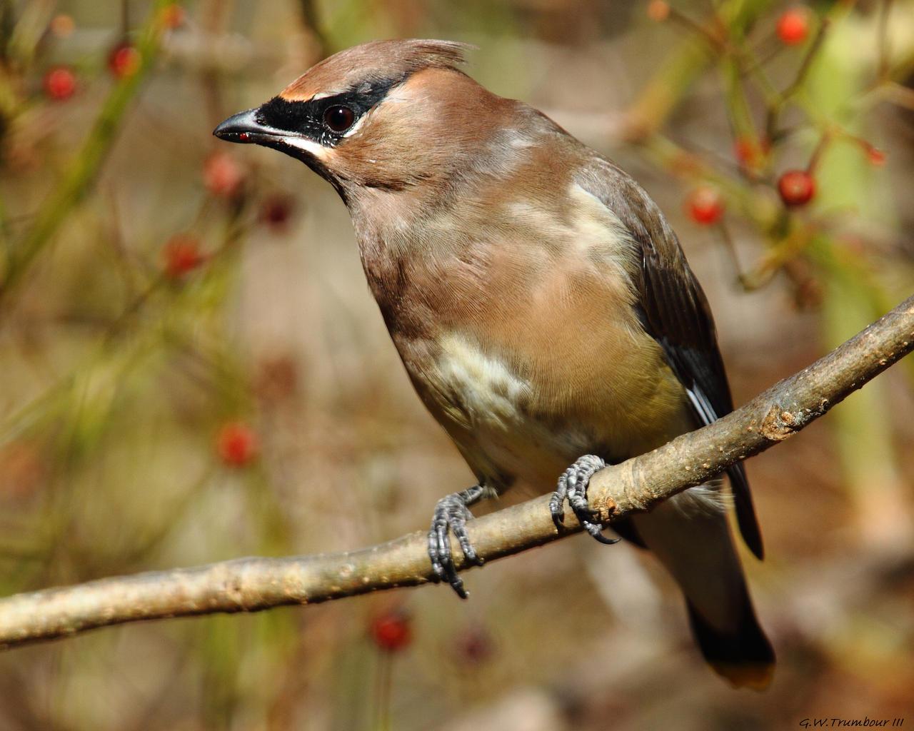 Dirty Beak by natureguy