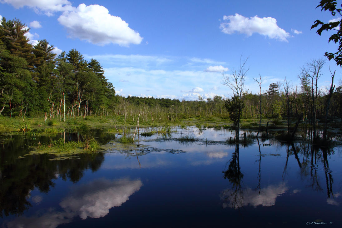 My favorite marsh by natureguy
