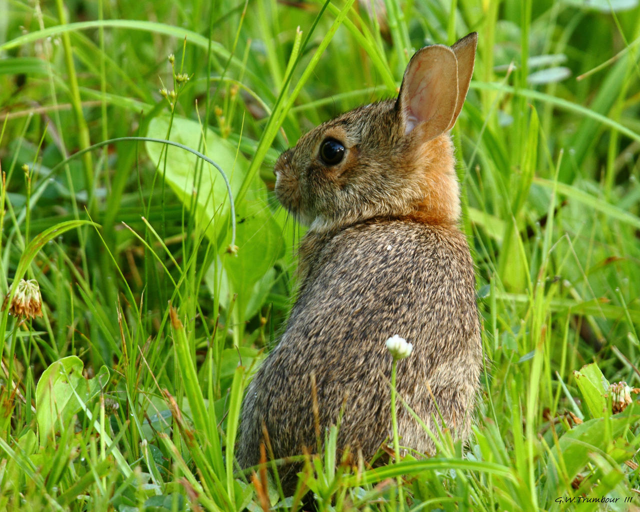 Neat young bunny by natureguy