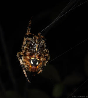 Underside of a Spider