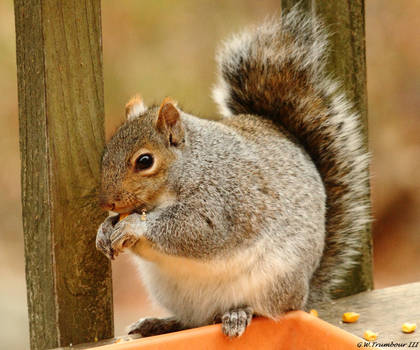Chunky the Squirrel