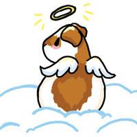 Lil Angel Guinea Pig by evilekeeper