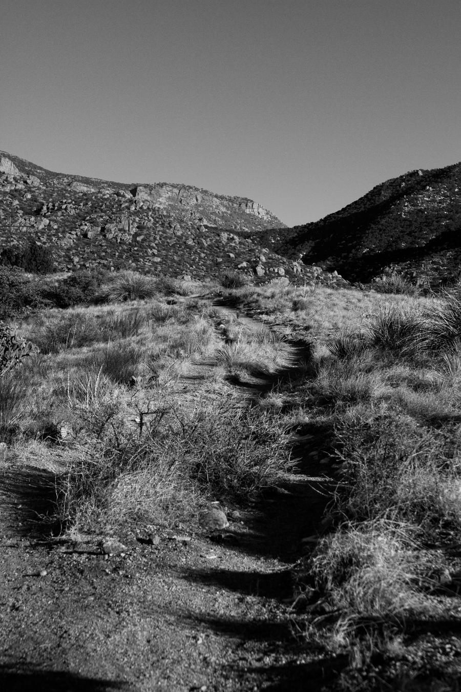 Desert Path by M-Lewis