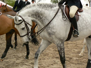 Stock-Gray Eq Horse Arched