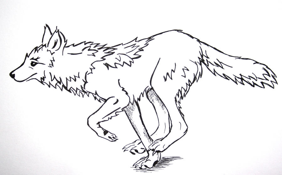 Image Result For Coyote Coloring Page