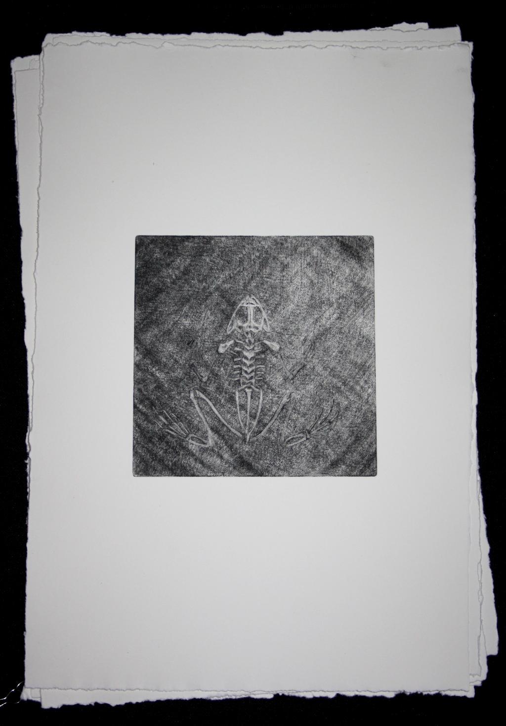 frog skeleton study by SwarzezTier