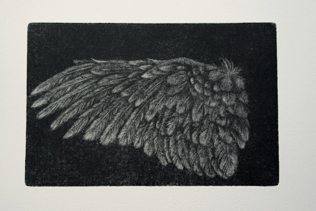 mezzotint wing by SwarzezTier