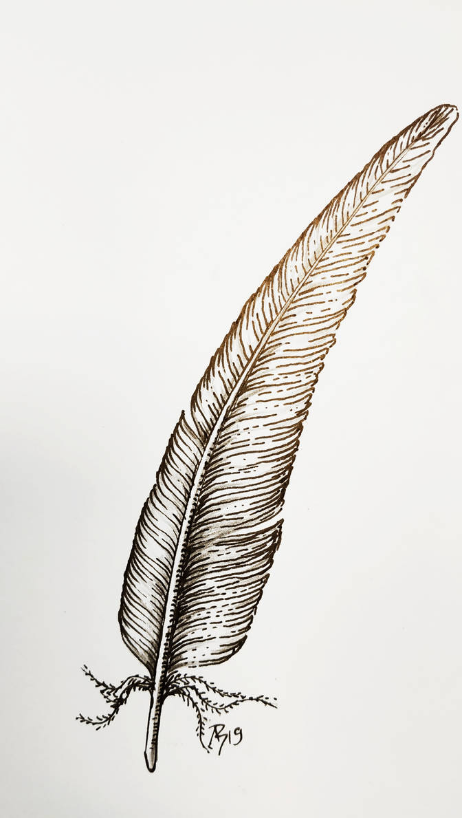 fast feather study