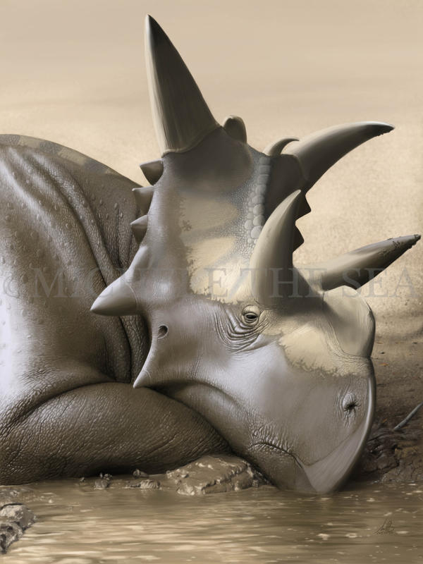 UP CLOSE (XENOCERATOPS FOREMOSTENSIS)