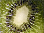 Kiwi I