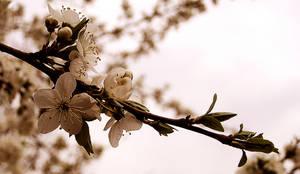Floures spring II