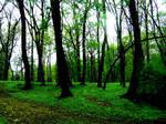 Park Saski in Lublin II