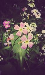 tiny flowers by KimagureTokio