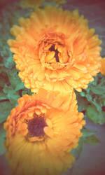 Flowers after an afternoon rain by KimagureTokio