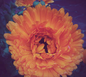 A little sunny flower by KimagureTokio