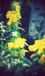 Golden Flowers by KimagureTokio