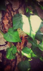 Ivy by KimagureTokio