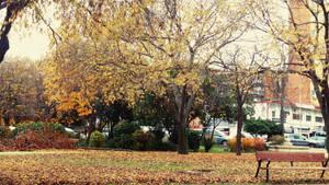 Autumn morning.