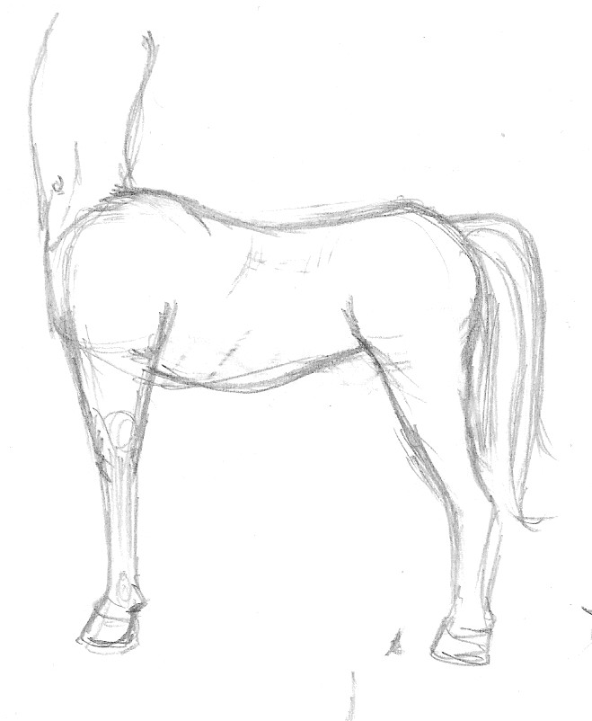 Horse Body Drawing Horse Body Sketch 01 by