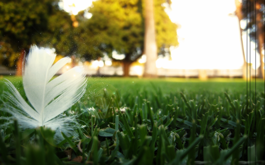 Lonely Feather.. by pilotZ3ro