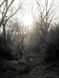 Dead Woods by Fairyblueskies