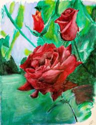roses by GrandEch