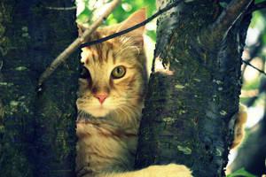 Hello, kittieh. by SofieCFriis