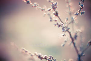 Spring. by SofieCFriis