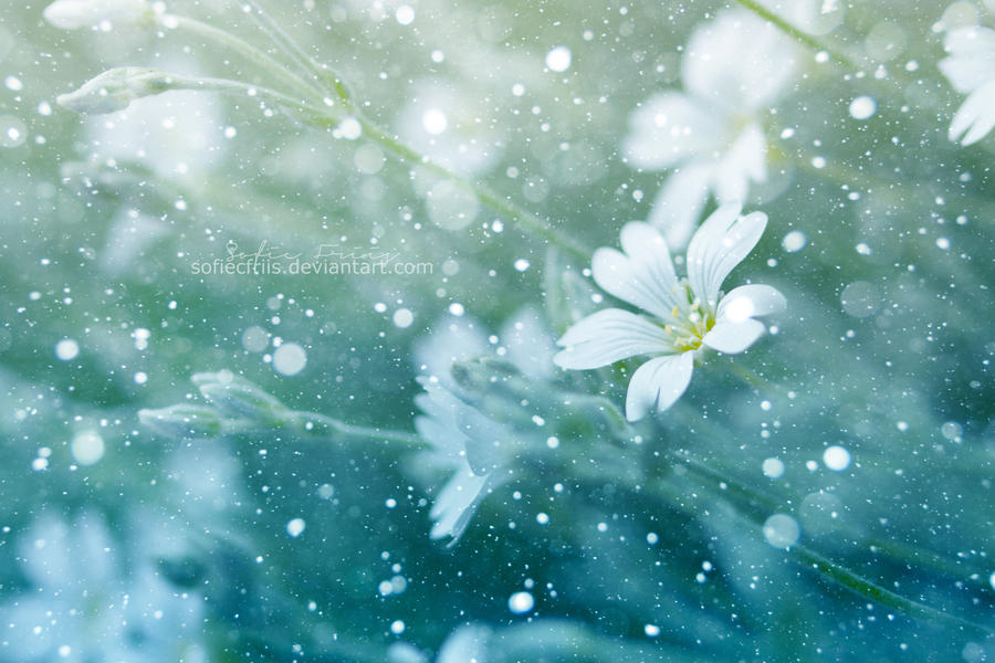 Snow flower. by SofieCFriis
