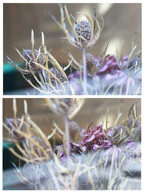 Forgotten flower by Ming-Shuw
