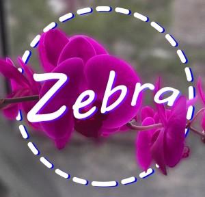 Zebra072's Profile Picture