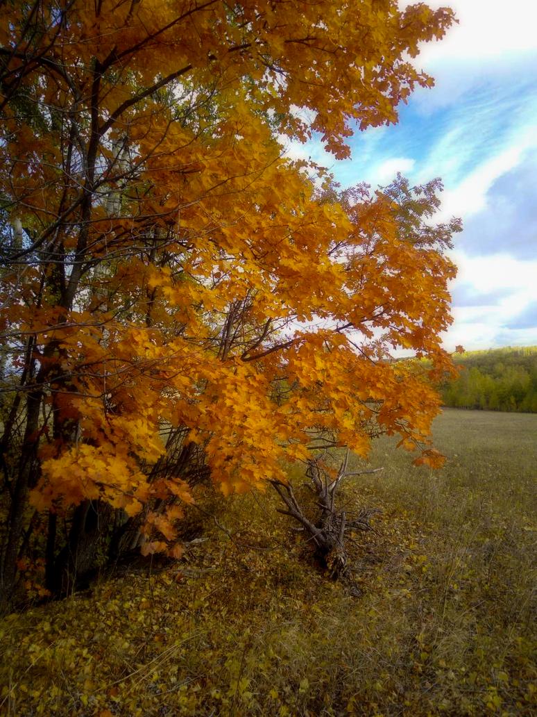 Tree on field by Zebra072