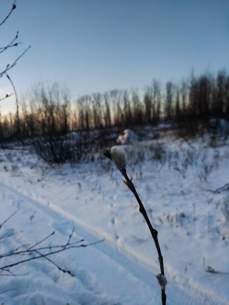 Winter is beautiful by Zebra072