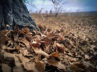 Autumn by Zebra072