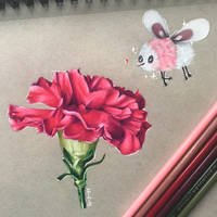 A Carnation for Cutiefly