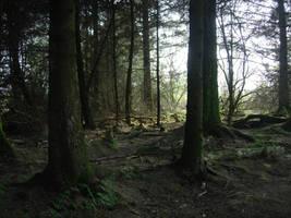 Forest Stock 1 by RidingInLongSocks