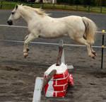 White pony- free jumping (3)